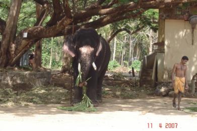 Prietenii mei, elefantii